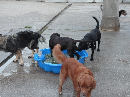 Hoge Veld Honden- en Kattenpension 't
