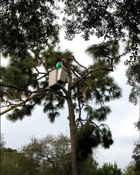 Independent Tree Service Inc image 3