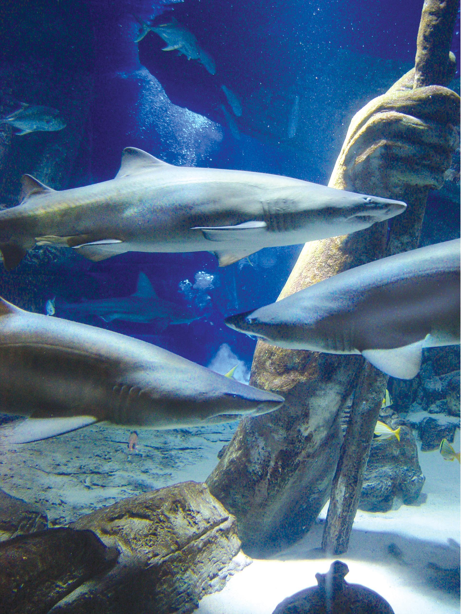 Discount coupons for atlantis aquarium riverhead ny