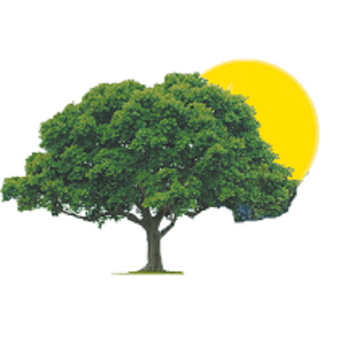 Treetime Inc.
