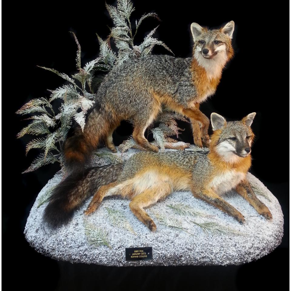 Natures Wildlife Artist Studio of Taxidermy