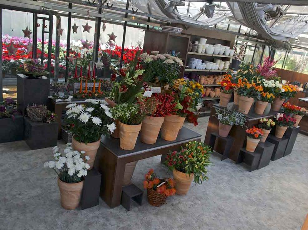 blumen und pflanzen in frankfurt ihre suche ergab 164 treffer infobel deutschland. Black Bedroom Furniture Sets. Home Design Ideas