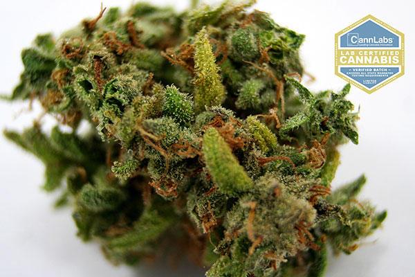 Nature S Herbs Greeley Colorado