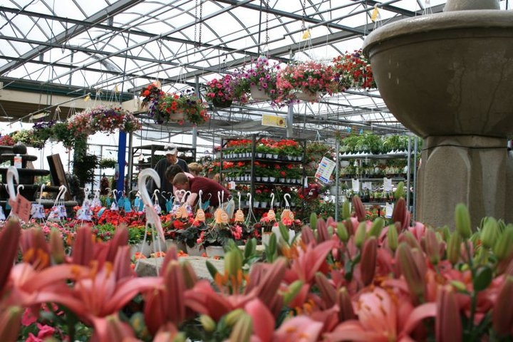 Flowerland coupons