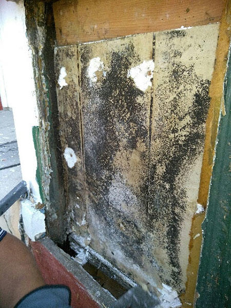Termite Treatment Cost Los Angeles