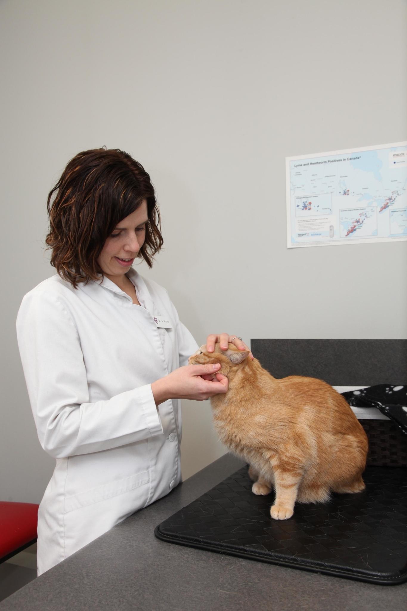 Machray Animal Hospital in Winnipeg