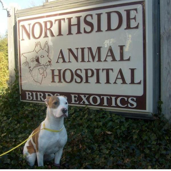 Veterinarian Staten Island