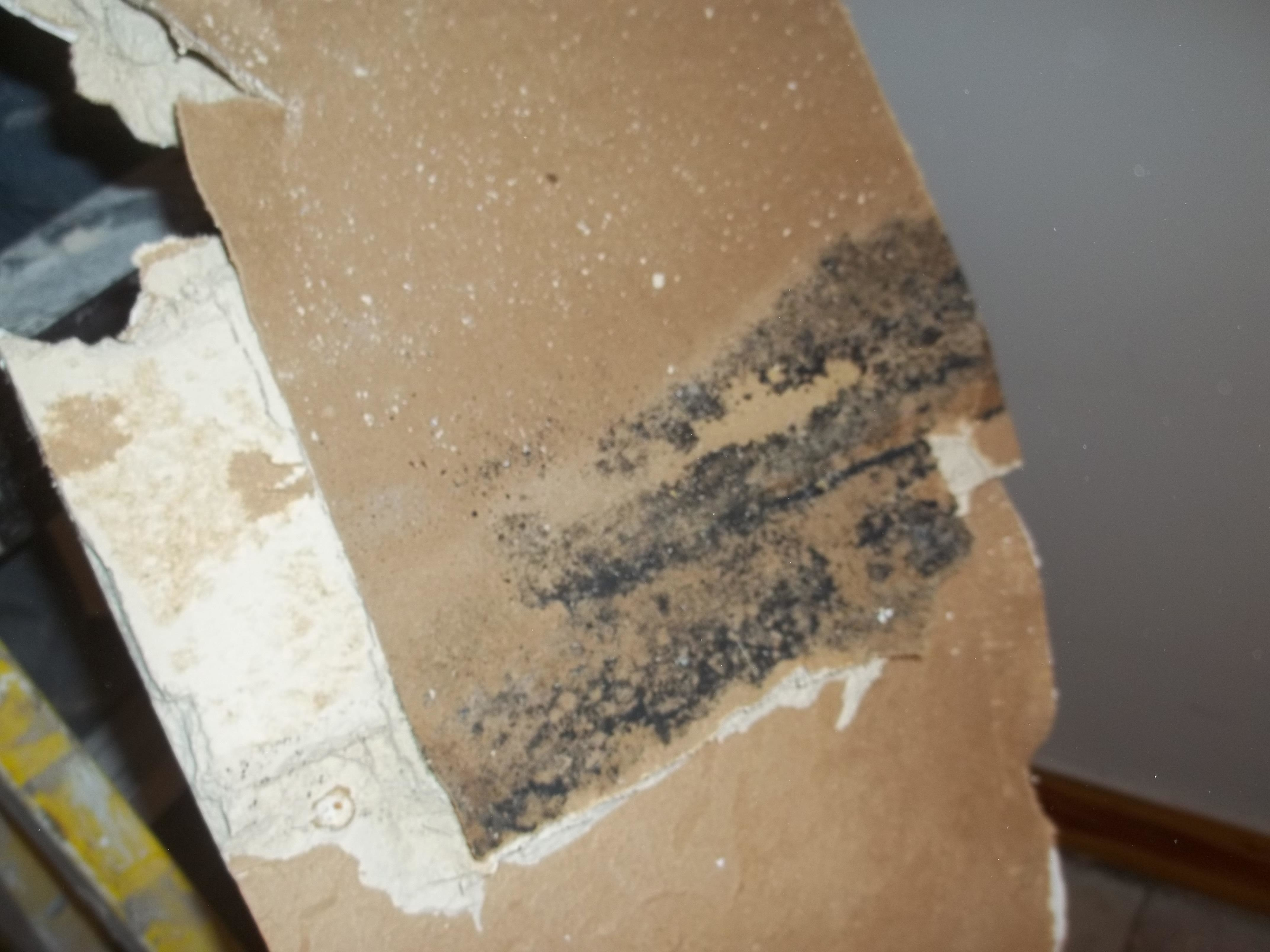 Anderson Restoration & Emergency Services - Water Damage & Mold Remediation image 8