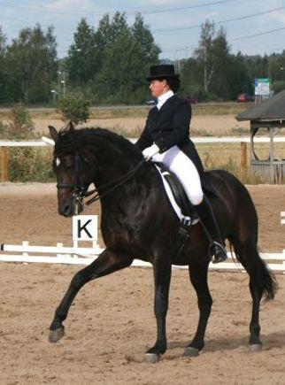 Trans Horses Ky