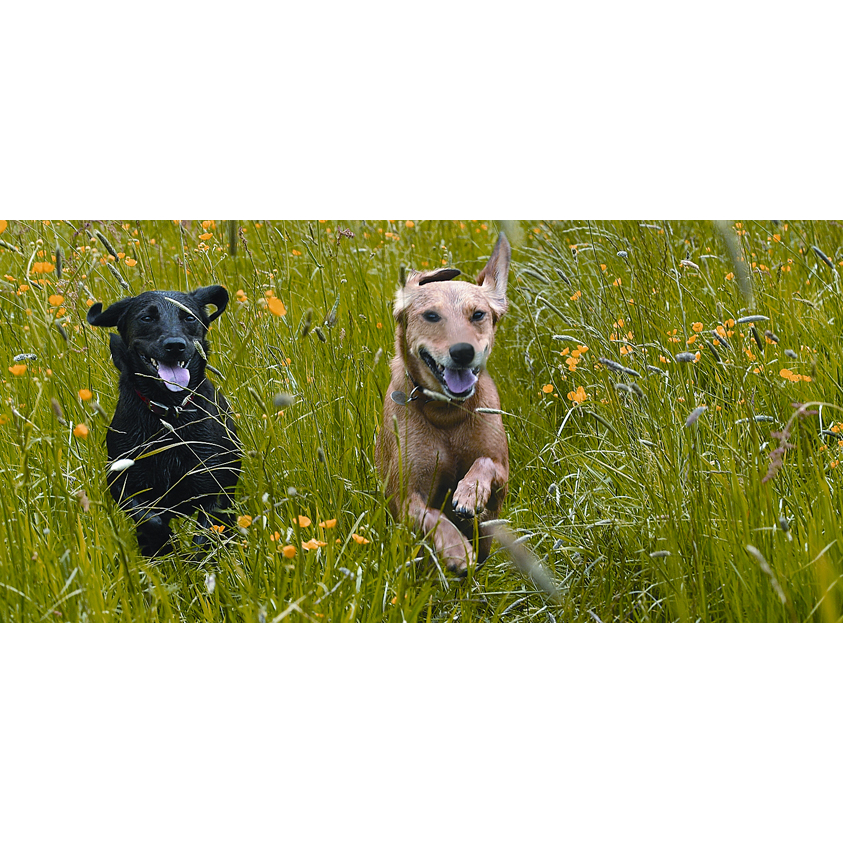 Dog Obedience Training Hamilton