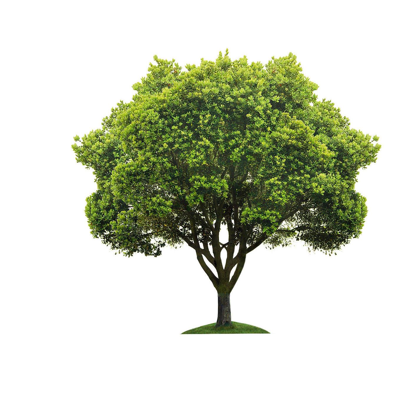 Arboristic Tree Care Llc