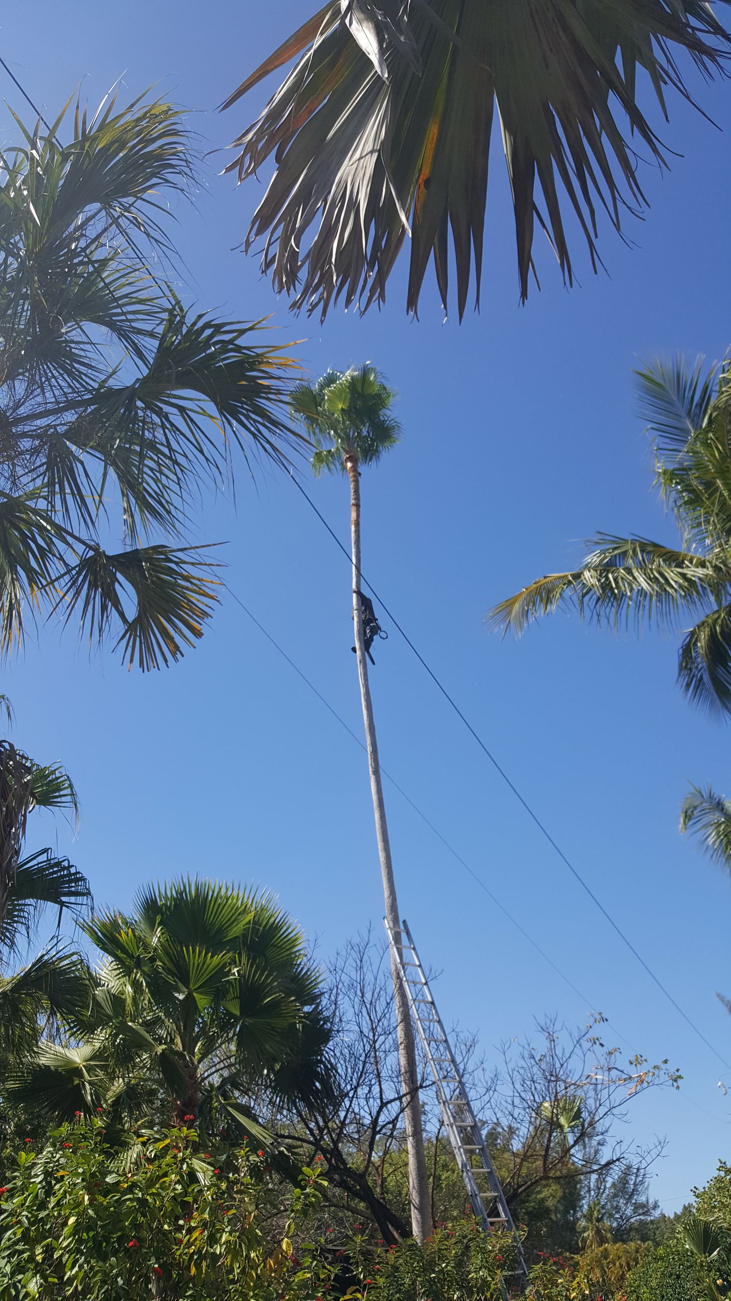 Valor Tree Specialist Fort Myers Florida Fl