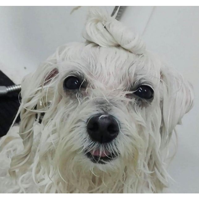 Belleza Animal, Pet Shop y Peluqueria Canina