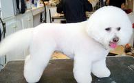 Canine Carousel Pet Salon - Herndon, VA