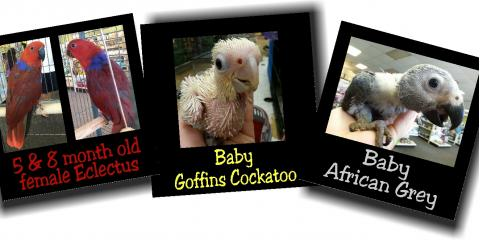 Exotic Birds Available Today!