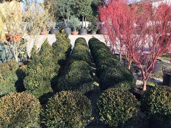 Casa giardino a loria infobel italia - Porcellato vivai ...
