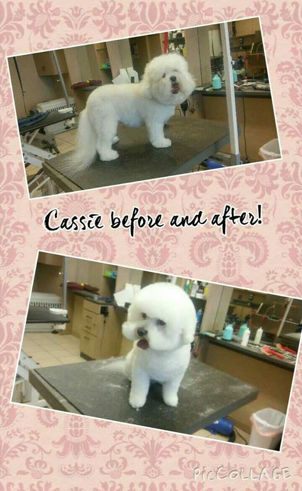Spotted dog pet grooming puyallup washington wa for Dog grooming salons near me