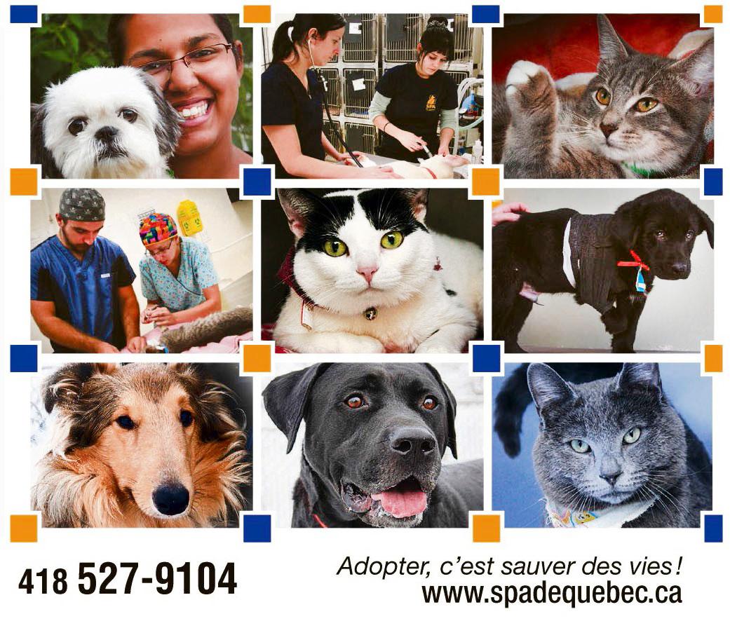 Societe Protectrice des Animaux de Quebec Quebec (418)527-9104
