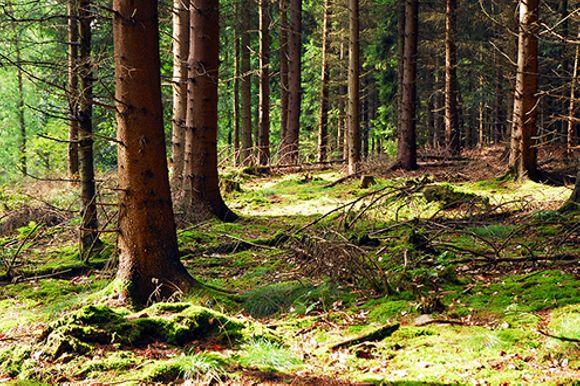 Puu- ja metsäpalvelu Zeh