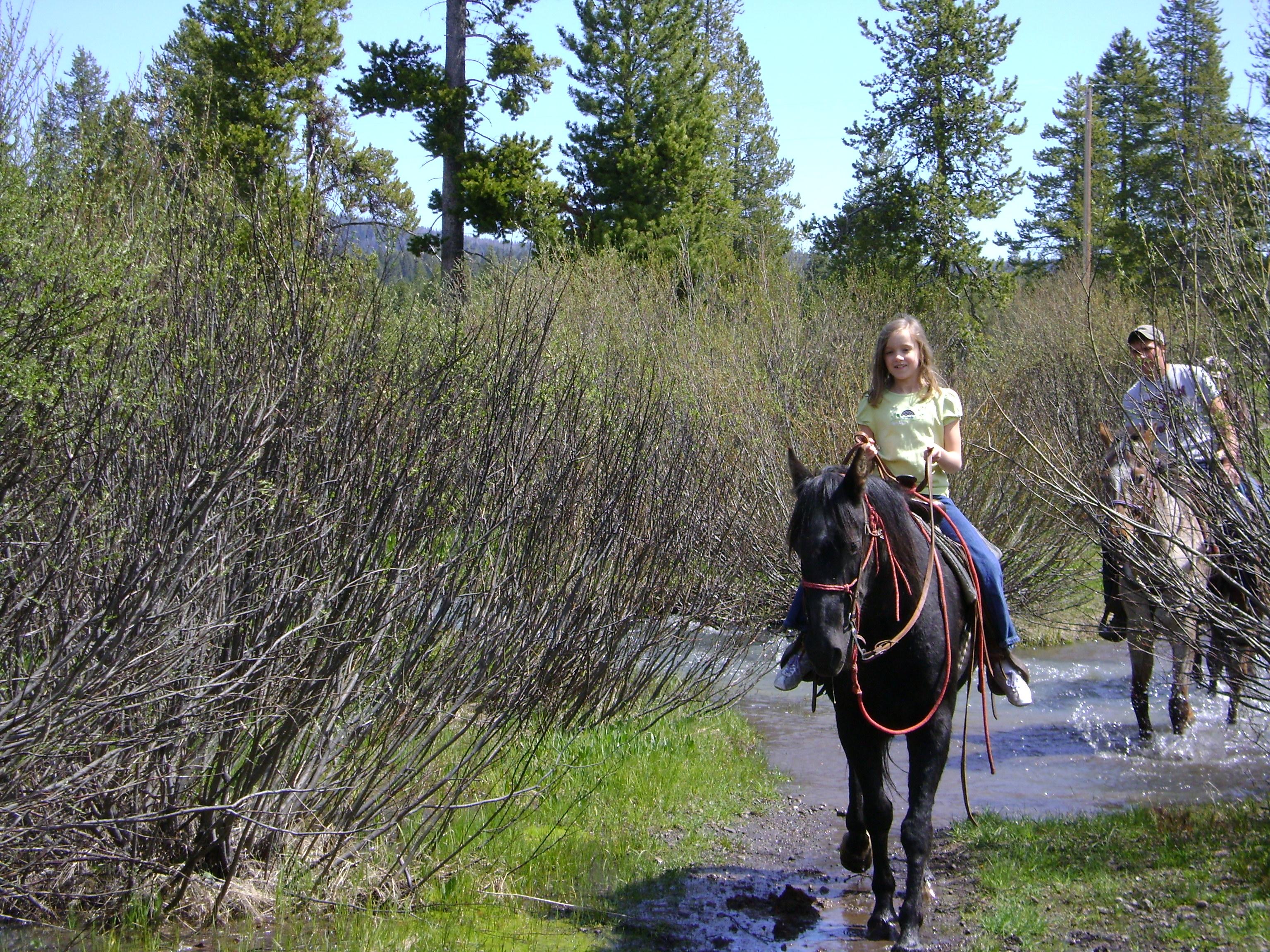 Yellowstone Horses at Eagle Ridge Ranch