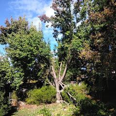 Tree service in Sacramento, California