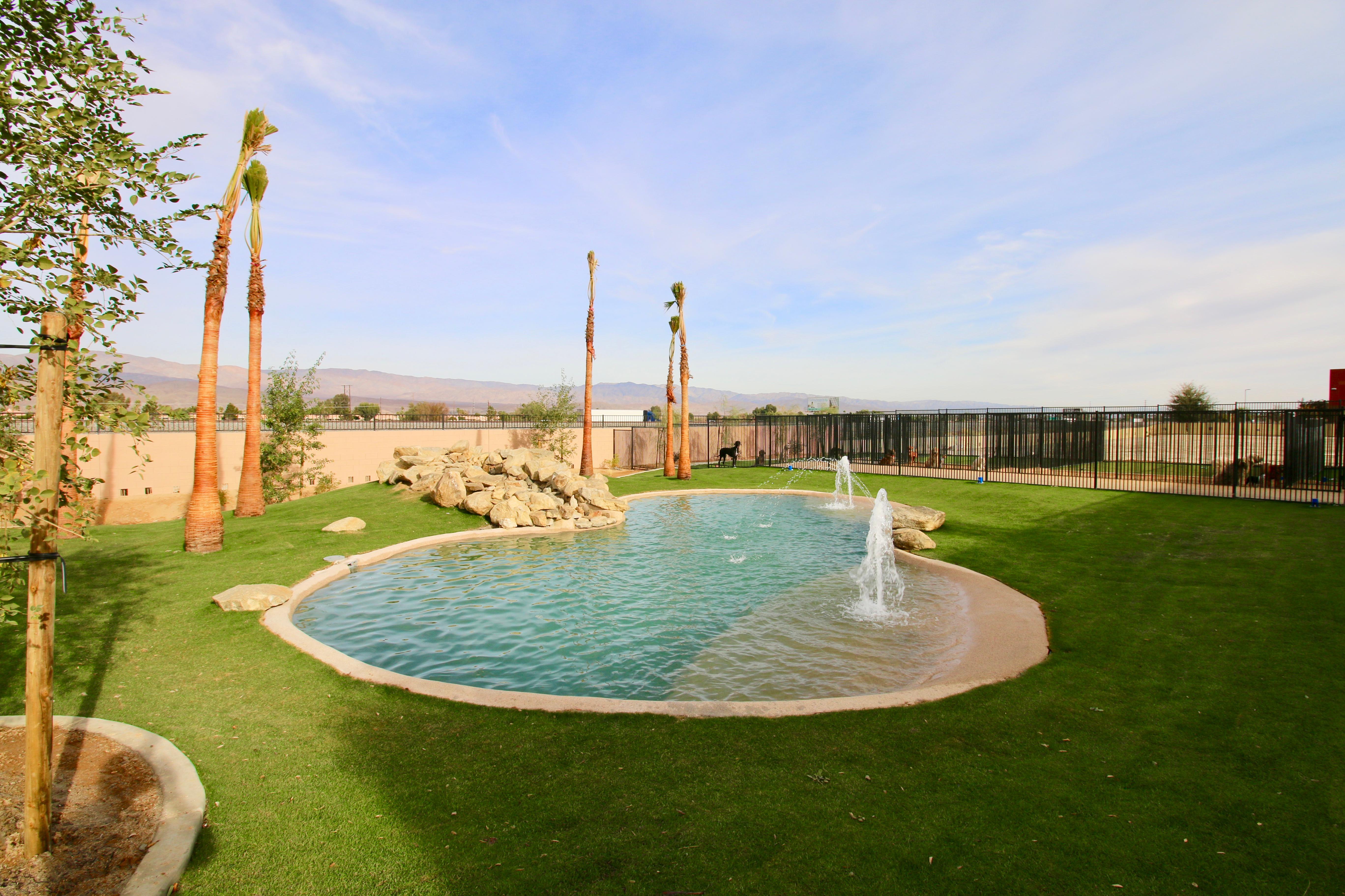 Dog Grooming Palm Desert Ca