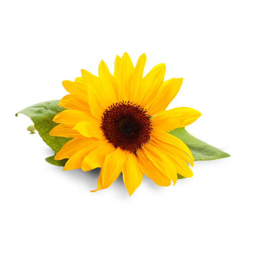 Sunshine Flowers & Gifts Coupons Near Me In Killeen
