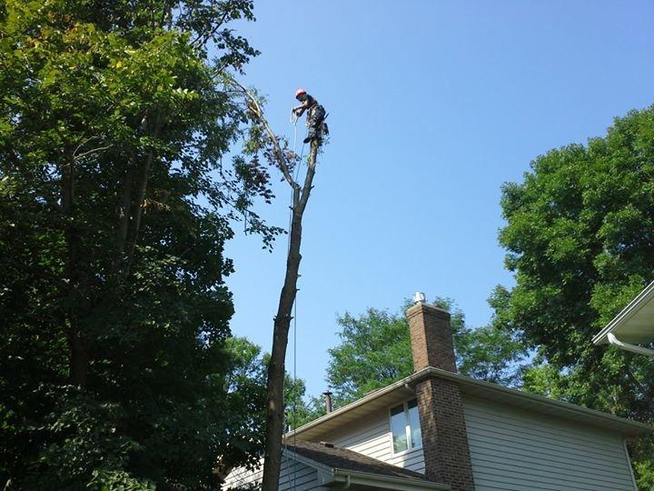 Golden Oak Tree Service