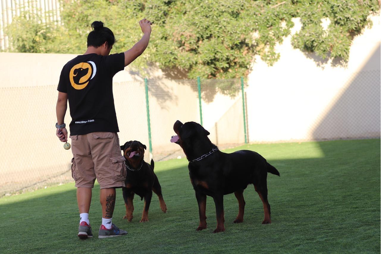 Canine Moe