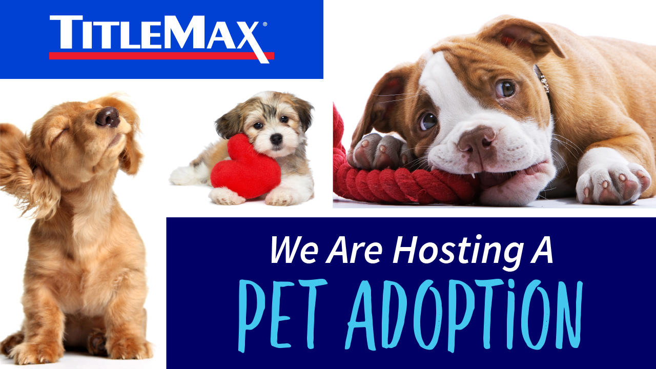 Pet Adoption Event at TitleMax Prescott, AZ