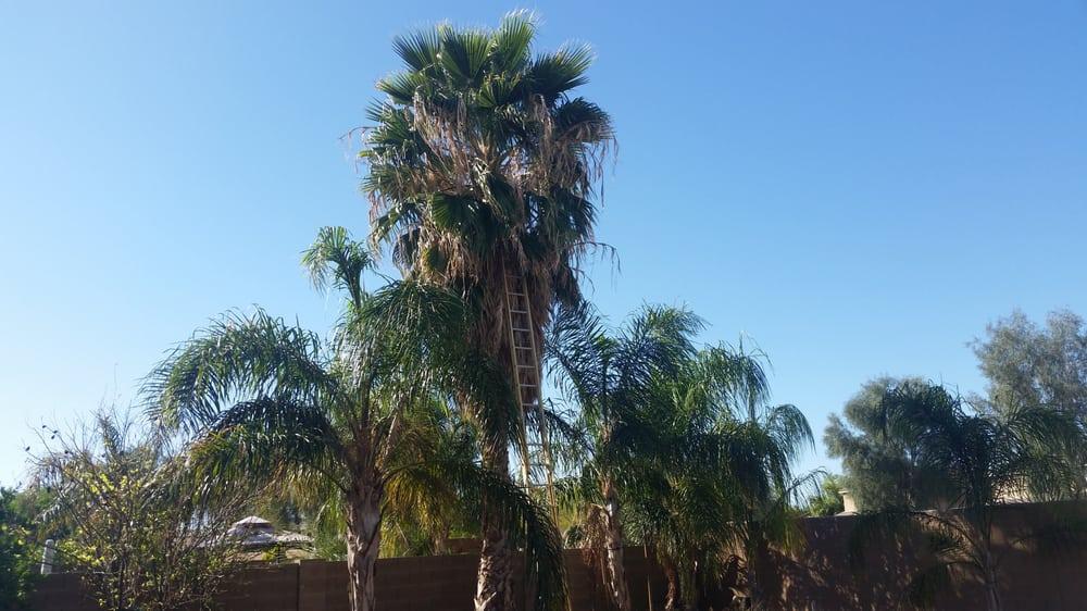Tdr Tree Services Mesa Arizona Az Localdatabase Com