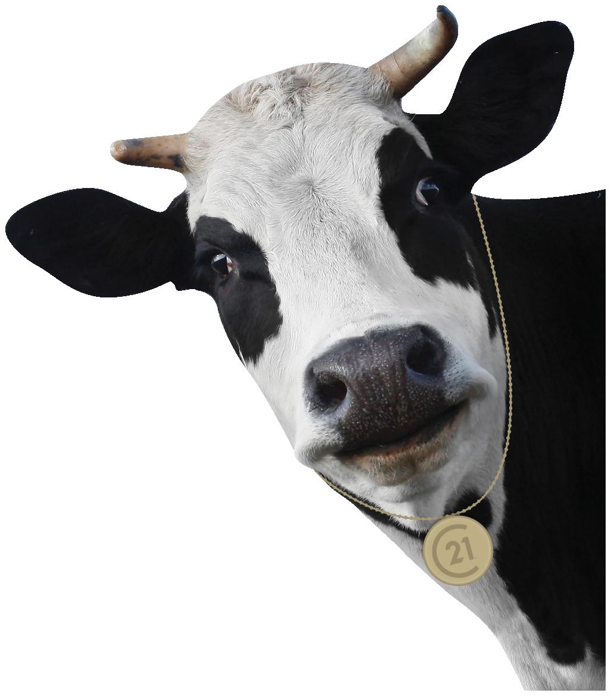 Chester the Cow Karen McGuffin Orangeville (519)216-1956