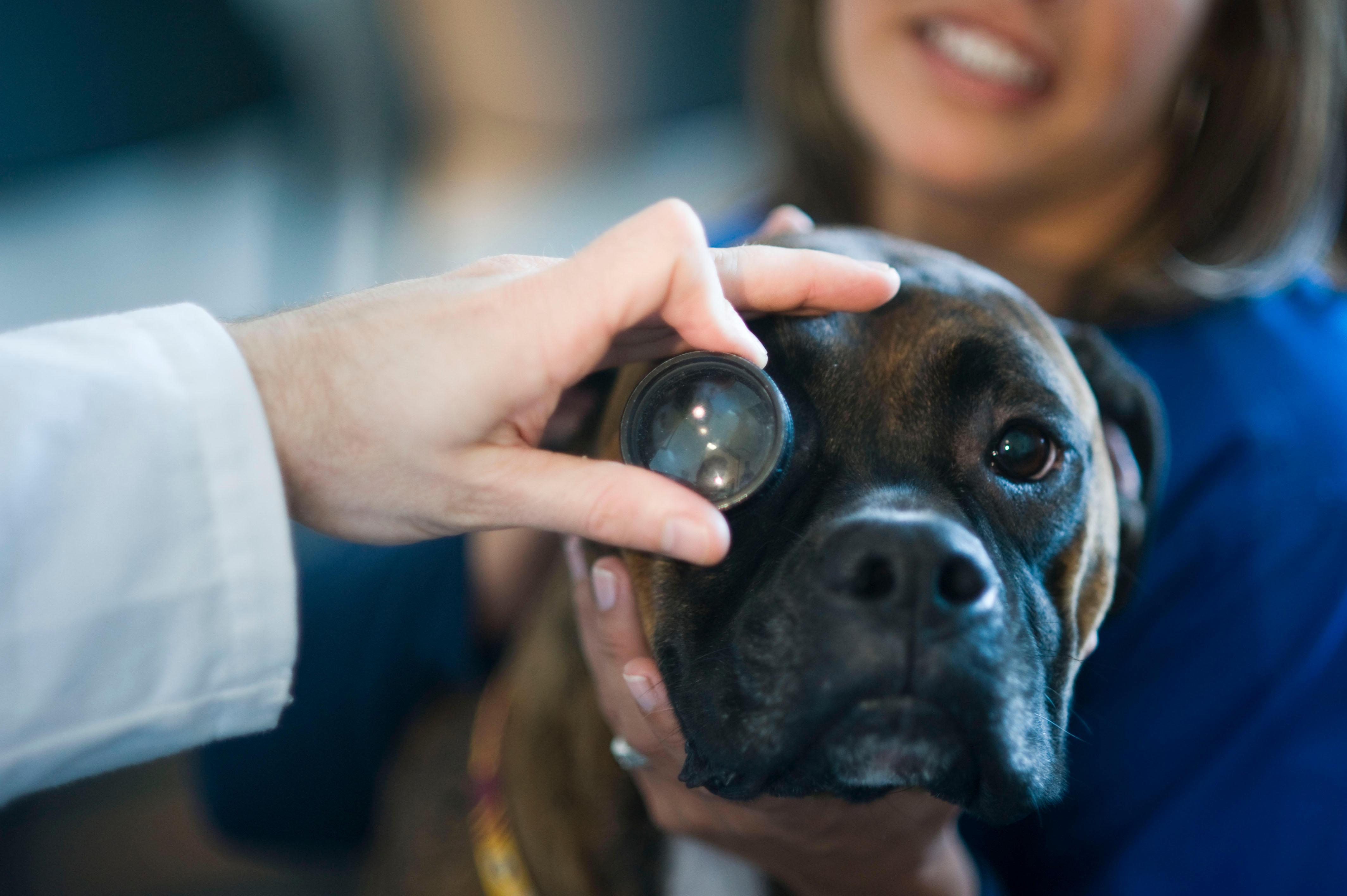 Bush Veterinary Neurology Service - Rockville