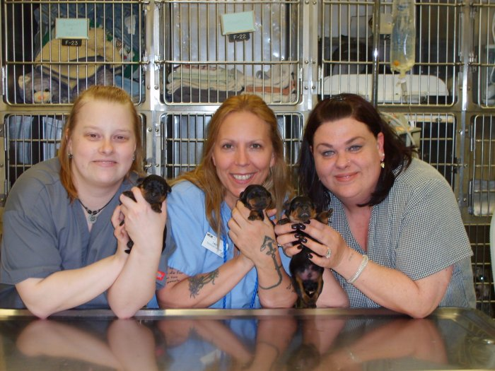 VCA Franklin Park Animal Hospital