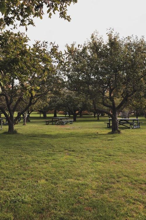 Moreno Landscaping