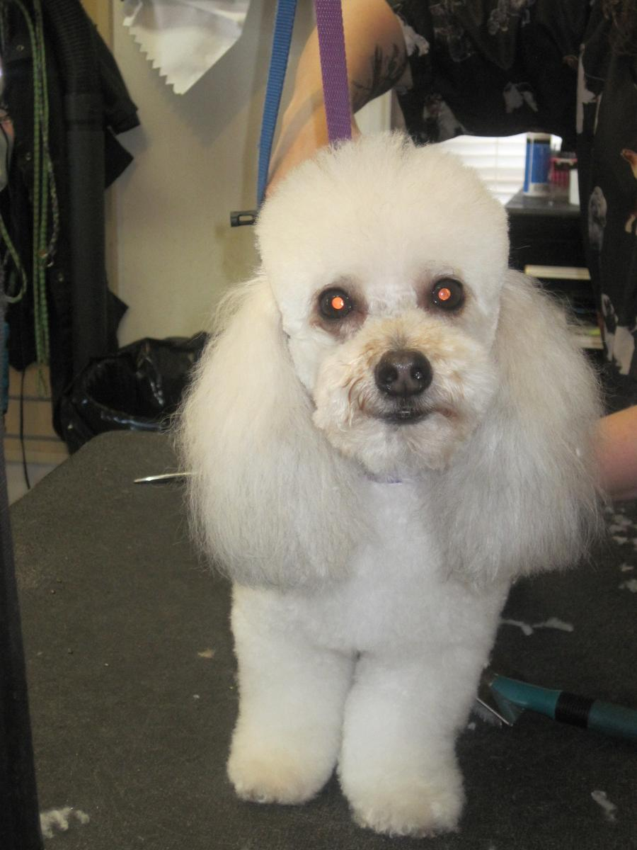 Sea peace pet grooming coupons near me in wilmington for Dog grooming salons near me