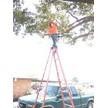 Paul's Tree Service