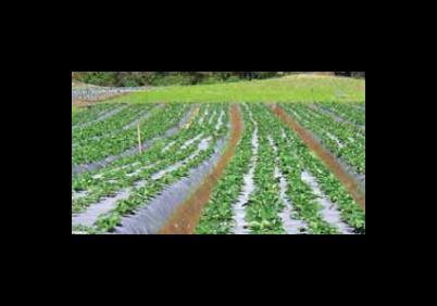 Cont Irrigazioni