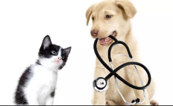 Treasure Valley Veterinary Clinic - Doug Griffiths DVM - Libby, MO 59923 - (406)293-7410 | ShowMeLocal.com