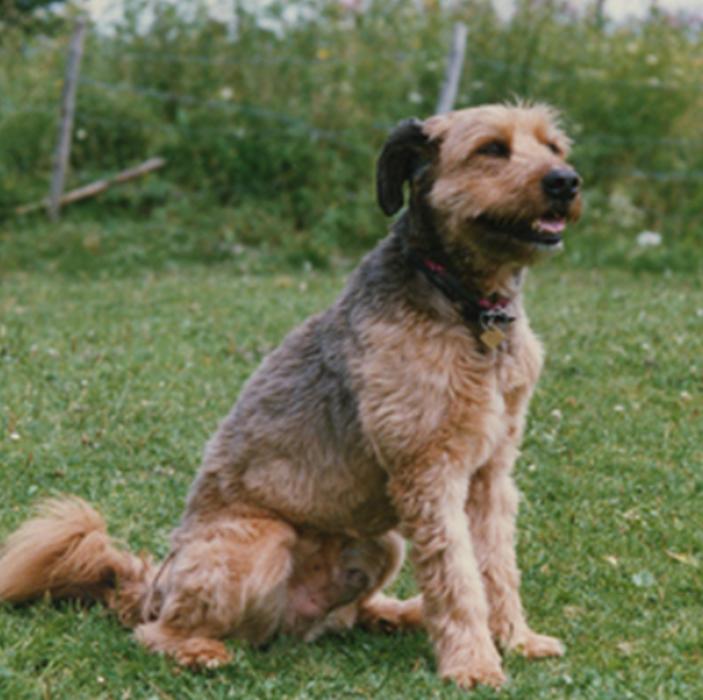 Hundepflege Schönegg Bern