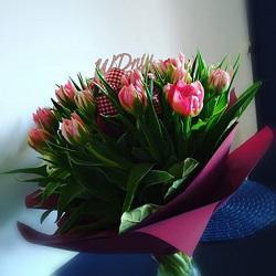Kwiaciarnia Euforia Anna Kacprzak