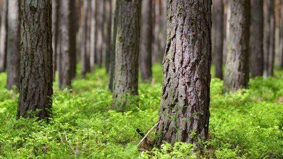 Metsänhoitoyhdistys Kanta-Häme Hausjärven toimipiste