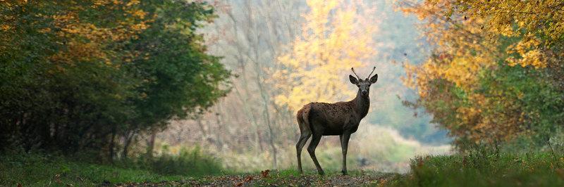 Nivon Natuurvrienden Landelijk Bureau