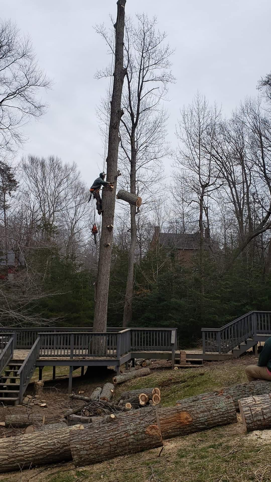 Timber Taskforce Tree Service