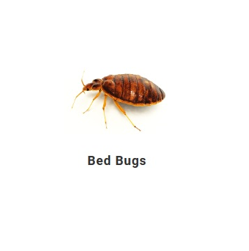 Odin Pest Control Bed Bug Exterminator Nyc In New York Ny 10001