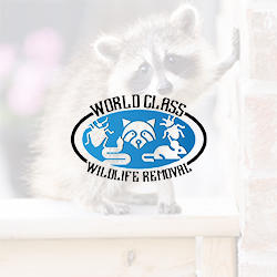 World Class Wildlife Removal & Rodent Remediation