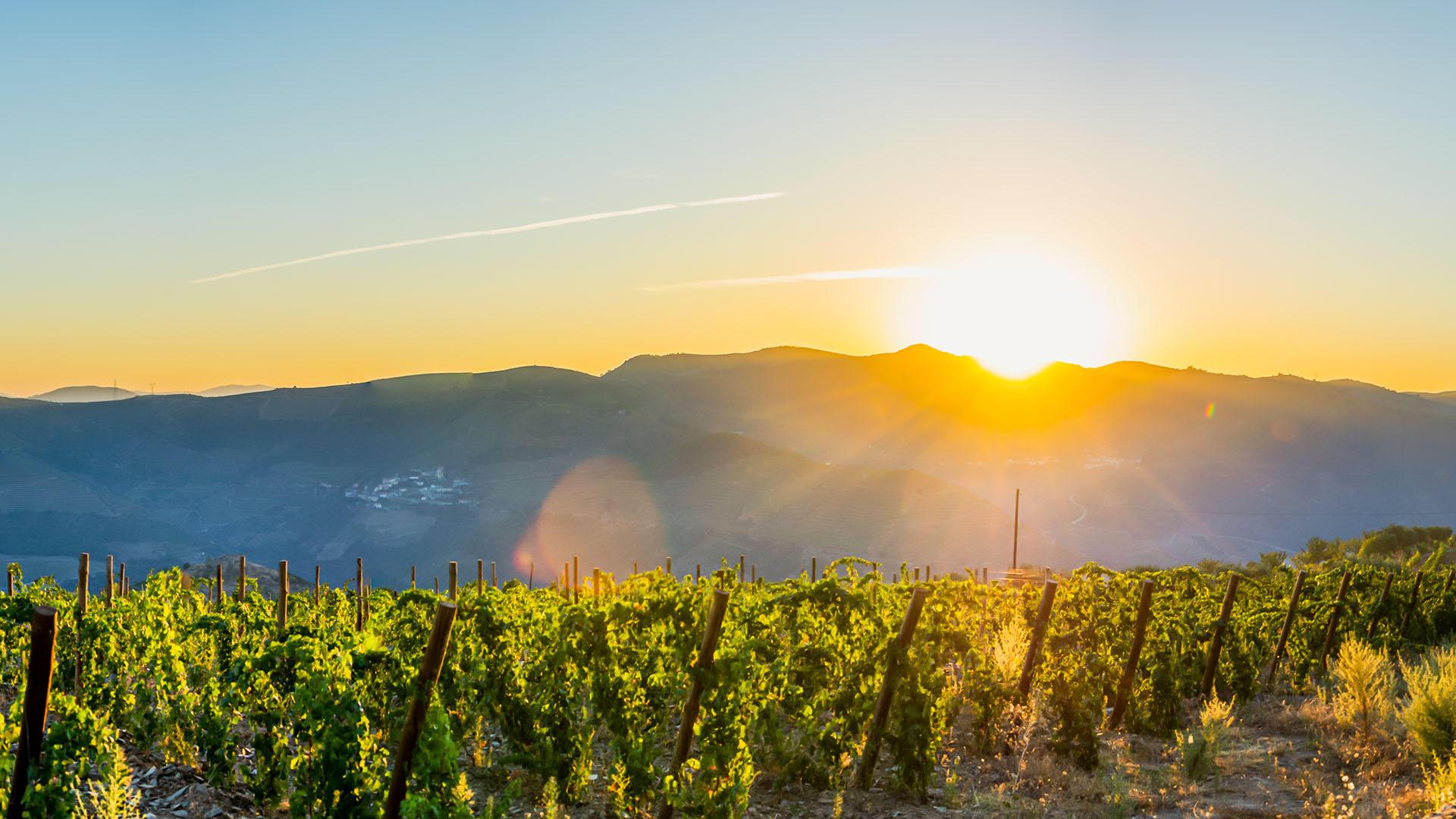 Hochwertige Weine aus unserer Region und aus Italien. Trinken Sie exklusive offene oder auch Flaschenweine in unserem Restaurant in Wangen