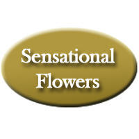 Sensational Flowers