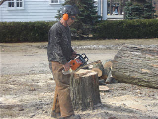 Images TTC Total Tree Care Services