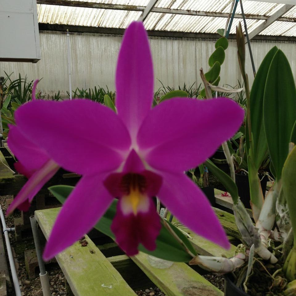 Cal-orchid Inc